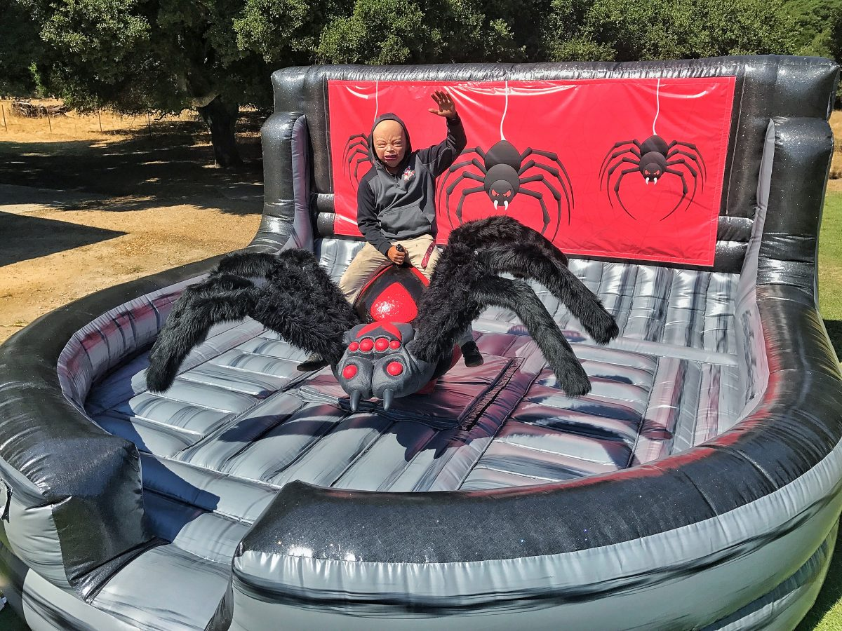 Mechanical black widow spider ride bay area