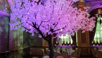 lighted led tree rentals carmel california